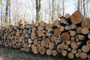 secnja-lesa